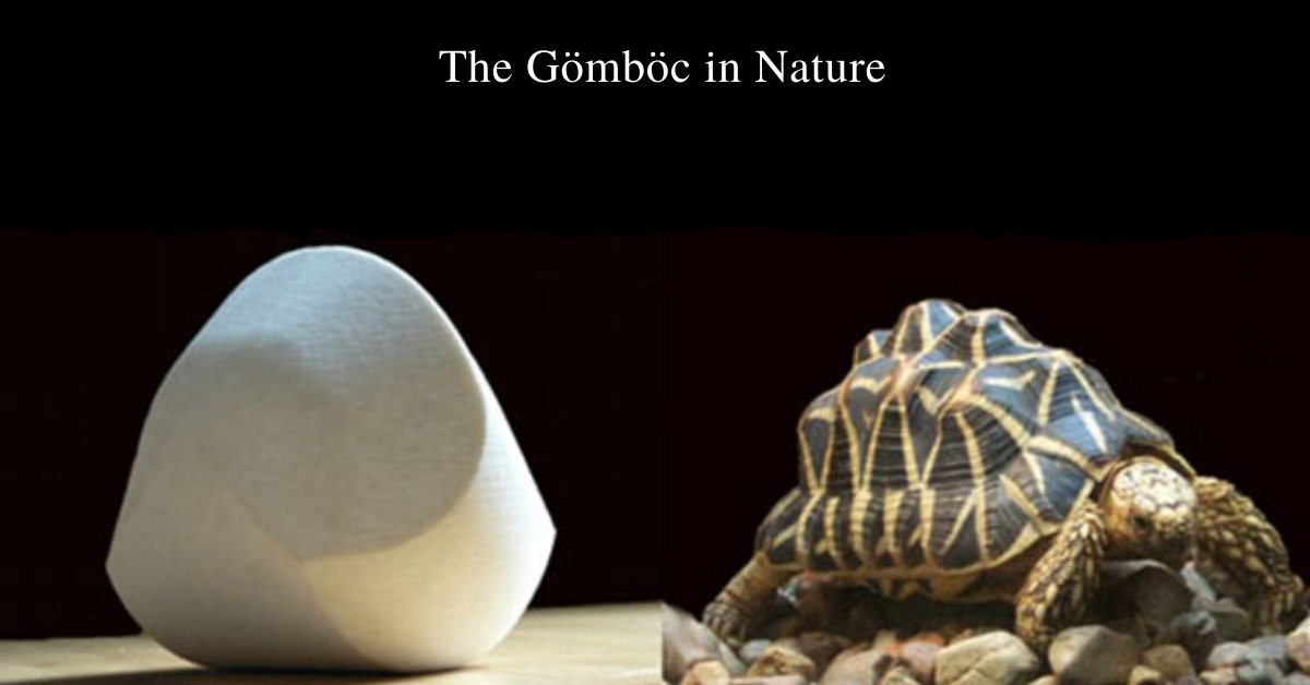 The Gömböc in Nature